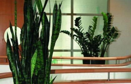 צמחיה במשרד – לא מה שחשבתם